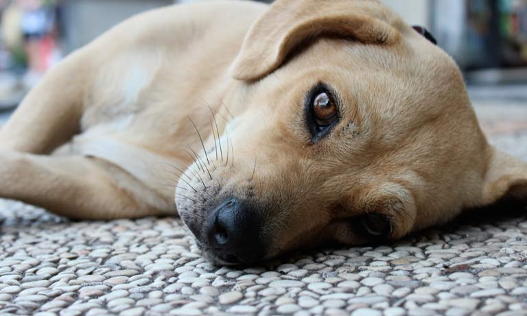 BVA roll out suite of resources to help Scottish vets report suspected illegal pet import cases
